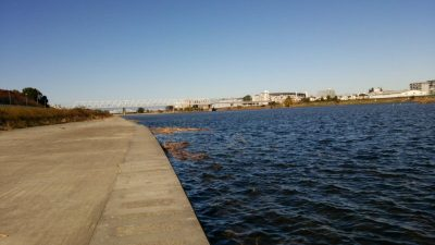 DSC 0256 400x225 多摩川 稲田堤のバス釣りエリアは、台風の影響で壊滅的 2017