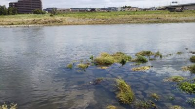 DSC 0005 400x225 【多摩川 バス釣り】バラシた獲物はデカかった|釣行記2019 6月 P.22