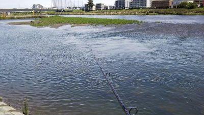 DSC 0007 400x225 【多摩川 バス釣り】バラシた獲物はデカかった|釣行記2019 6月 P.22