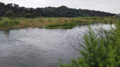 DSC 0007 400x225 【多摩川 バス釣り】梅雨の副産物を探しにランガン|釣行記2019 7月 P.25