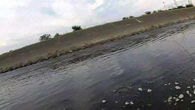 1008 400x225 【多摩川 バス釣り】スピニングとベイトフィネスをとっかえひっかえ|釣行記2019 10月 P.34