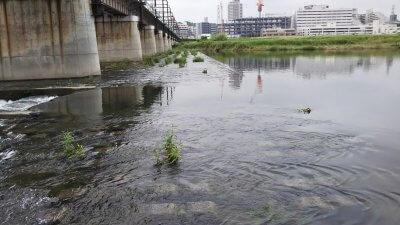 DSC 0002 1 400x225 【多摩川 バス釣り】台風後に多摩川が消滅した!?2019(秋)ここのポイントは完全に終わった。  釣行記2019 11月 P.38