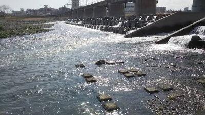 DSC 0110 400x225 【多摩川 バス釣り】台風後に多摩川が消滅した!?2019(秋)ここのポイントは完全に終わった。  釣行記2019 11月 P.38