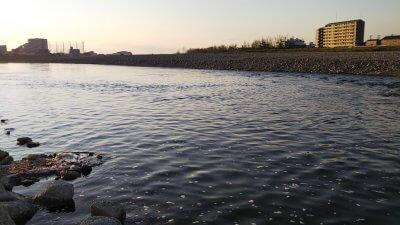 DSC 0109 400x225 【バス釣り 多摩川】朝マズメはまだ寒かった。もう何デコ連チャンしてる?|釣行記2020 4月 P.05