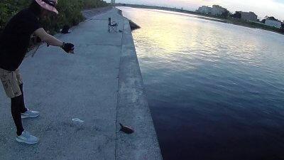 20 05 400x225 【多摩川 バス釣り】夕まずめにチャンスタイムはなかった|釣行記2020 8月 P.15