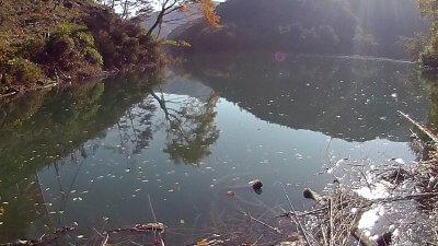 1117 07 400x225 【多摩川 バス釣り】奥多摩湖をスクーターでランガン|釣行記2020 11月 P.21