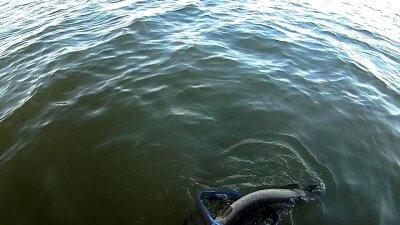 02316 08 400x225 【多摩川 バス釣り】ベイトリール飛距離計測中に、まさかの大物がヒット!|釣行記2021 2月 P.02