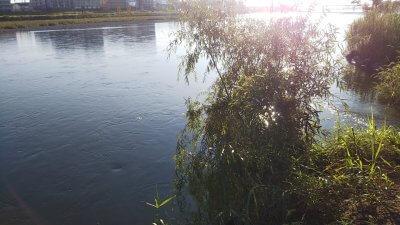 DSC 0474 400x225 【多摩川 バス釣り】シルバーウィークはやっぱり激混み|釣行記2021 9月 P.22